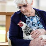 A Whiddon resident lovingly holding a hen as part of Whiddon's HenPower program.